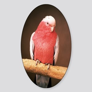 Roseate cockatoo Sticker (Oval)