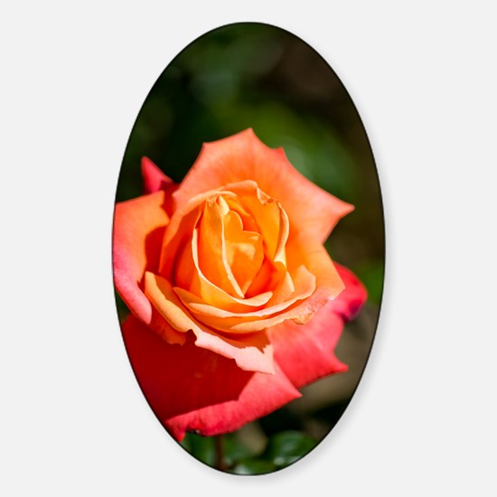 Rosa Troika = 'Poumidor' Sticker (Oval)