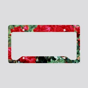 Rose 'Invincible' flowers License Plate Holder