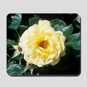 Rose 'Arthur Bell' flower Mousepad