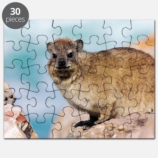 Rock Dassie Puzzle