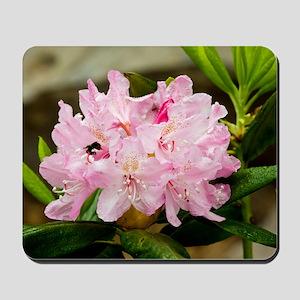 Rhododendron macrophyllum Mousepad