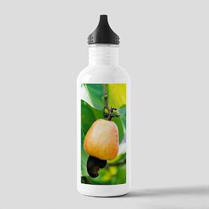 Ripe cashew nut Stainless Water Bottle 1.0L