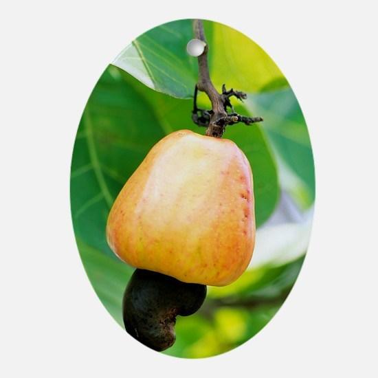 Ripe cashew nut Oval Ornament