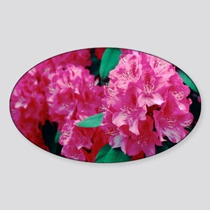 Rhododendron 'Cynthia' Sticker (Oval)