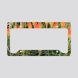 Red Hot Poker (Kniphofia) License Plate Holder