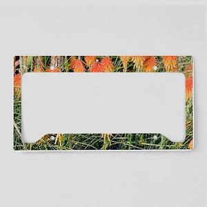 Red Hot Poker (Kniphofia) License Plate Holder