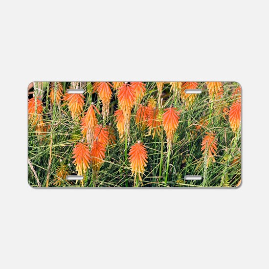 Red Hot Poker (Kniphofia) Aluminum License Plate