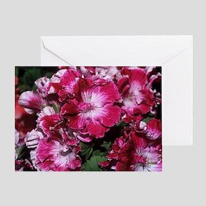 Regal geranium 'Peter's Choice' flow Greeting Card