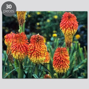 Red hot poker (Kniphofia rooperi) Puzzle