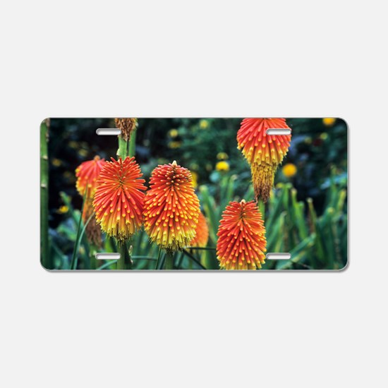 Red hot poker (Kniphofia ro Aluminum License Plate