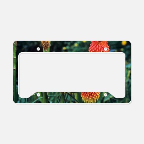 Red hot poker (Kniphofia roop License Plate Holder