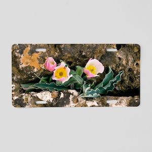 Ranunculus calandrinioides Aluminum License Plate