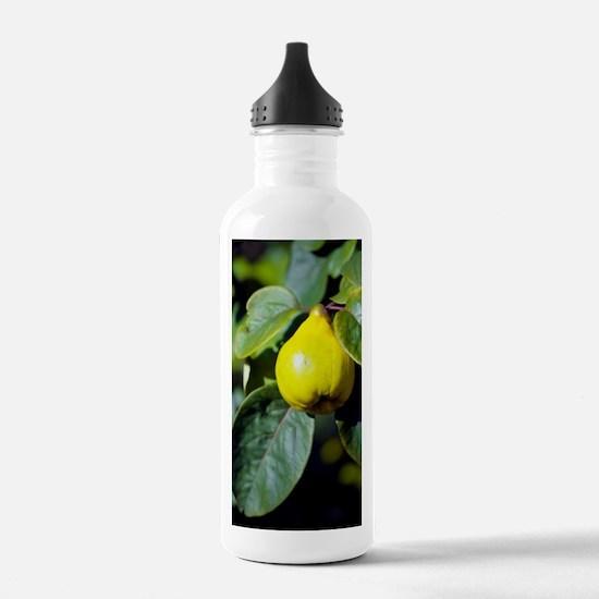 Quince fruit Water Bottle