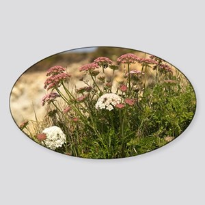 Queen Anne's lace (Daucus carota) Sticker (Oval)