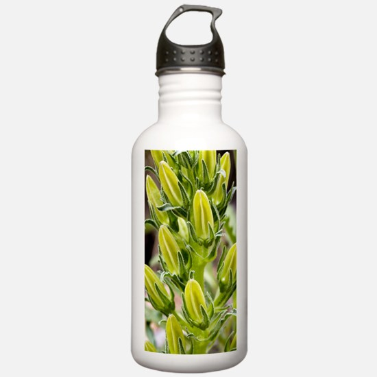 Pyrenean bellflower (C Water Bottle
