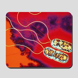 Pseudomonas sp. bacteria, TEM Mousepad