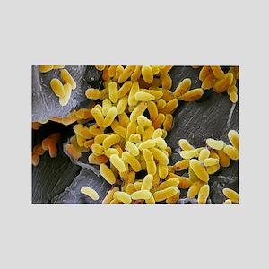 Pseudomonas aeruginosa bacteria,  Rectangle Magnet