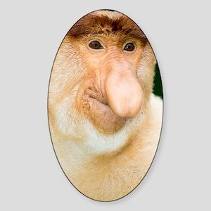 Proboscis monkey Sticker (Oval)