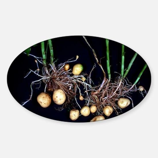 Potato roots Sticker (Oval)