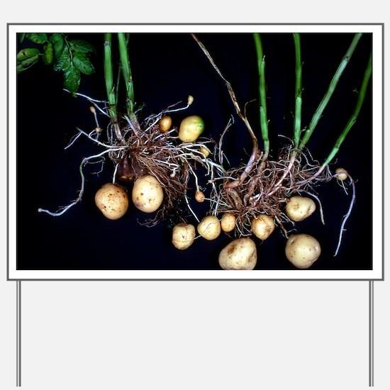 Potato roots Yard Sign