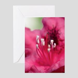 Poppy flower Greeting Card