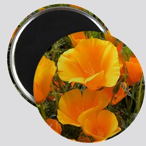 Poppies (Eschscholzia californica) Magnet