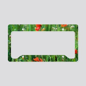 Poppy (Papaver sp.) flowers License Plate Holder