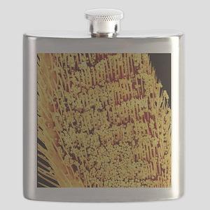 Pollen on honey bee leg, SEM Flask