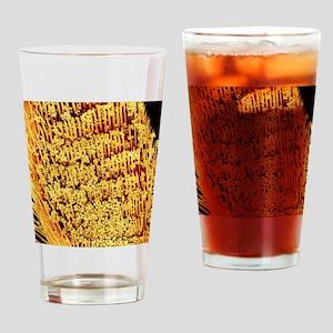 Pollen on honey bee leg, SEM Drinking Glass
