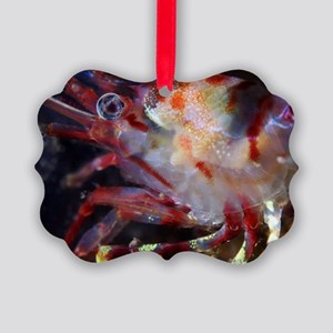 Polar shrimp Picture Ornament