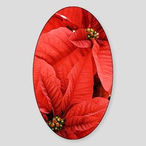 Poinsettia (Euphorbia pulcherrima) Sticker (Oval)