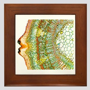 Plant breathing pore, light micrograph Framed Tile