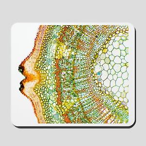 Plant breathing pore, light micrograph Mousepad