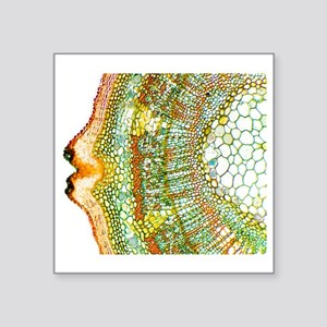 "Plant breathing pore, light Square Sticker 3"" x 3"""