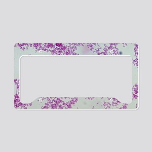 Plague bacteria License Plate Holder