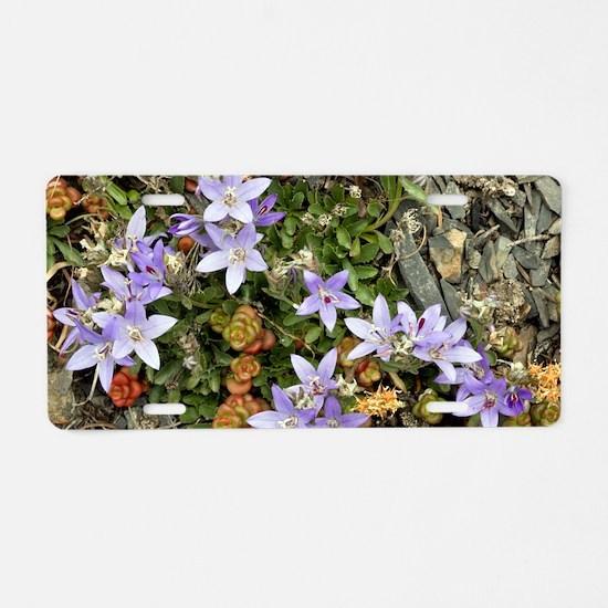 Piper's bellflower (Campanu Aluminum License Plate
