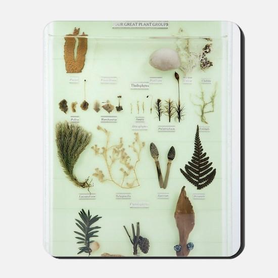 Plant group specimens, artwork Mousepad
