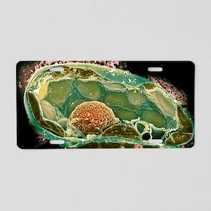 Plant cell, SEM Aluminum License Plate