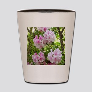 Pink rhododendron (Rhododendron sp.) Shot Glass