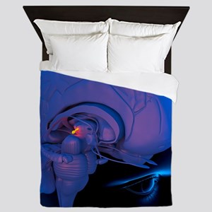 Pineal gland in the brain, artwork Queen Duvet
