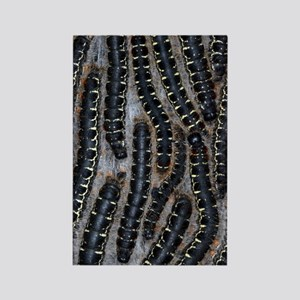 Pine processionary moth caterpill Rectangle Magnet