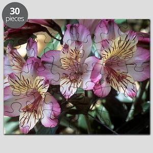 Peruvian lily (Alstroemeria 'Balance') Puzzle