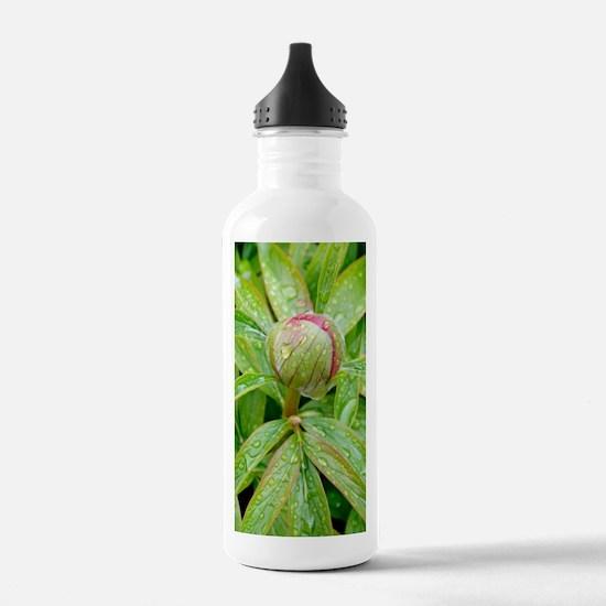 Peony (Paeonia sp.) Water Bottle