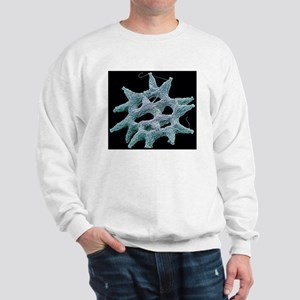 Pediastrum alga, SEM Sweatshirt