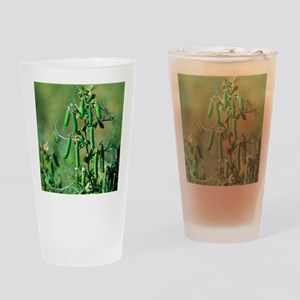 Pea plant Drinking Glass