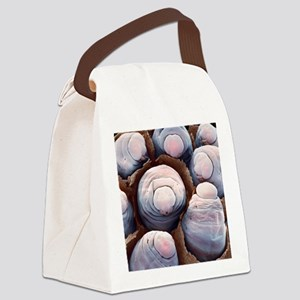 Paper wasp larvae, SEM Canvas Lunch Bag