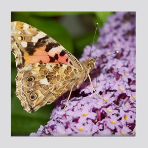 Painted lady butterfly feeding Tile Coaster