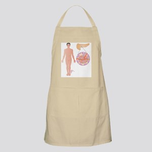 Pancreas, artwork Apron