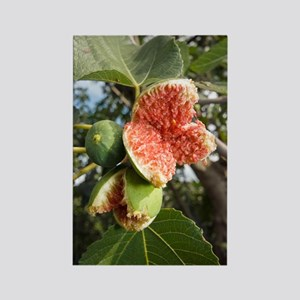 Over-ripe figs on a tree Rectangle Magnet